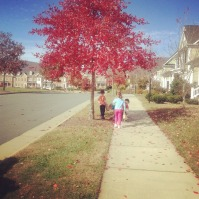 We utalize the outdoors whenever possible. Children are collecting leaves during a nature walk.